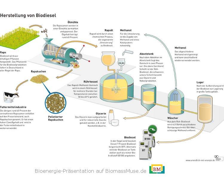 10-Herstellung-von-Biodiesel