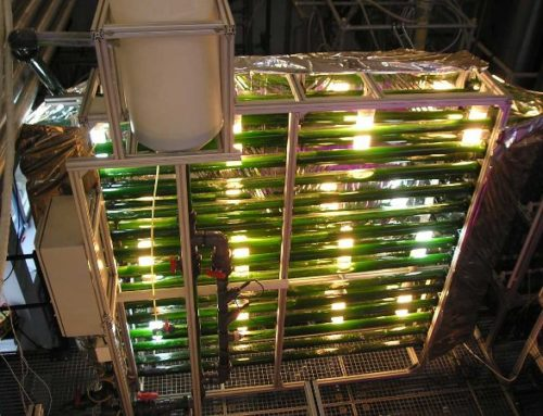 Algenkultivierung: Vorstellung der Algenforschung an der TH Wildau