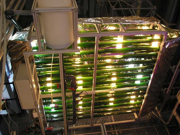 Bioreactor for algae cultivation