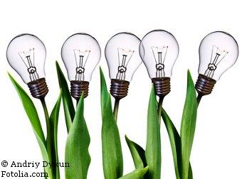 Mais-Glübirnen Ideen und Beratung im Bereich Bioenergie