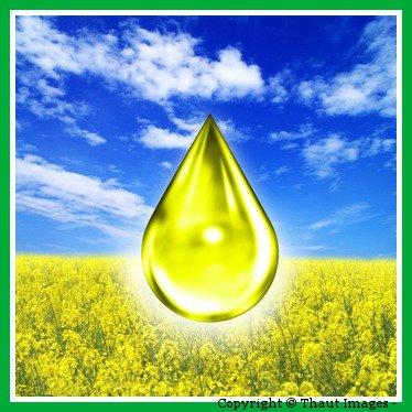 Biodiesel Bild