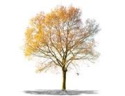 Bioenergie im Herbst