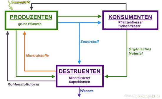 Darstellung Biomasse-Kreislauf Kohlenstoffkreislauf mit Produzenten Konsumenten Destruenten