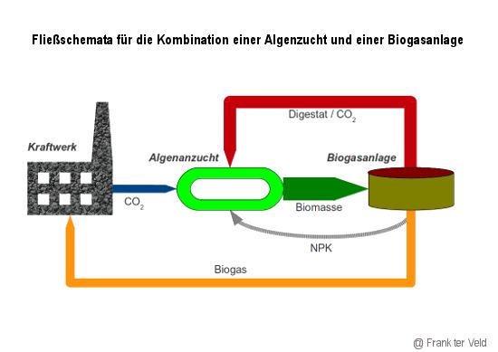 Fließschemate Herstellung Biogas aus Algen