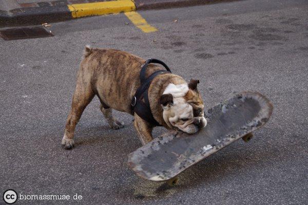Foto: Hund mit Skateboard