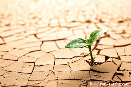 Bioenergie Bild