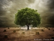 Die Nachhaltigkeit der Bioenergie