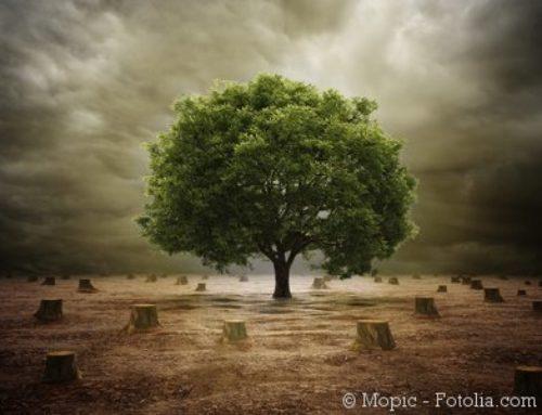 Fortschritte bei der Nachhaltigkeit von Bioenergie