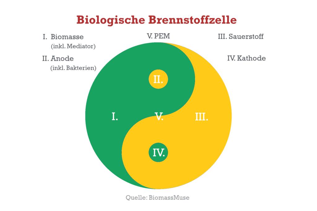 Biologische Brennstoffzelle als Bio-Batterie Ying Yang