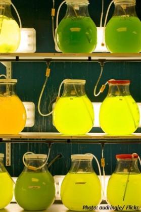 Algenreaktor Labor Spirulina Chlorella Algenkraftstoff Biokraftstoff Öl