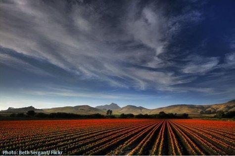Ackerfeld zum Anbau von Energiepflanzen für Biokraftstoffe und Biogas