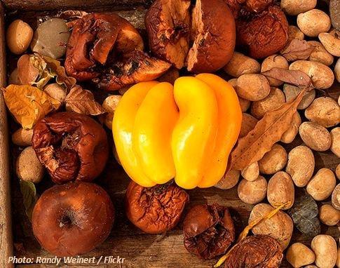 Organische Abfälle und Speisereste für biogasanlage und Fermenter organic waste