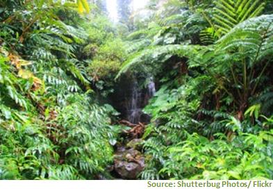 Regenwald Schutz mit Zertifizierungssystemen für nachhaltige Biomasse