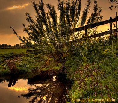 Eutrophierung durch Energiepflanzenbau für Biogasanlage trotz Düngeverordnung und Düngegesetz