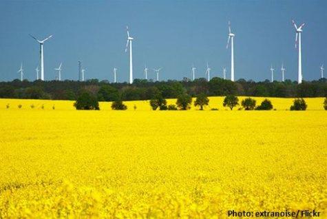 Bioenergie Nachwachsende Rohstoffe Rapsfeld Windenergie