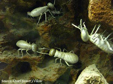 Abbau von Lignocellulose durch enzyme von Termiten beschleunigen